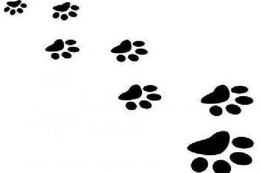 猫 足跡画像