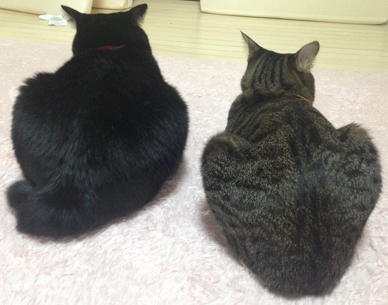 2匹が仲良く寝そべる画像