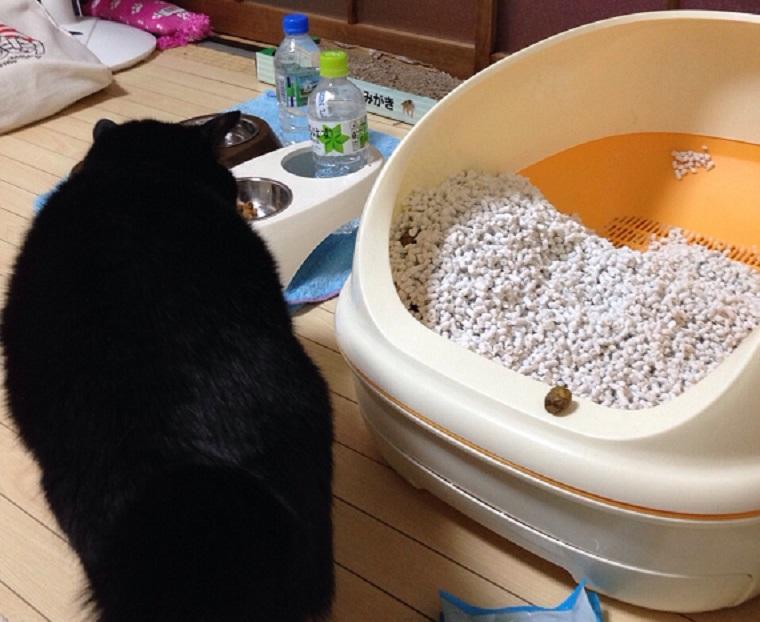 用を足した後、汚れた状態の猫トイレ